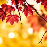 پاییز و طب سنتی